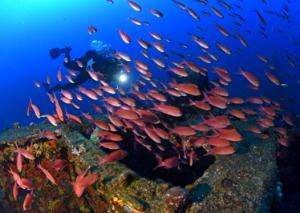 Réserve marine de Port-Cros